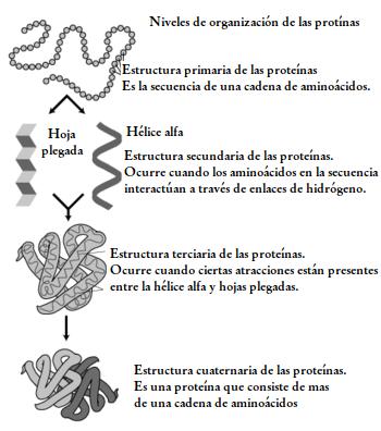 BIOLOGÍA CUARTO CICLO: 3 Lección: Lenguaje de la herencia.: 3 ...