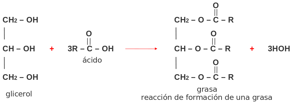 Química 11 2 Lección Lípidos 2 Lección Lípidos